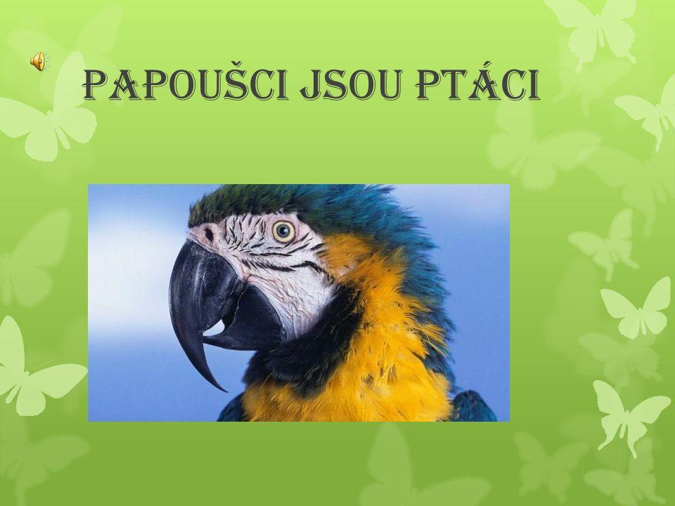 JAK VYPADÁ PAPOUŠEK. Papoušek je malý nebo velký.