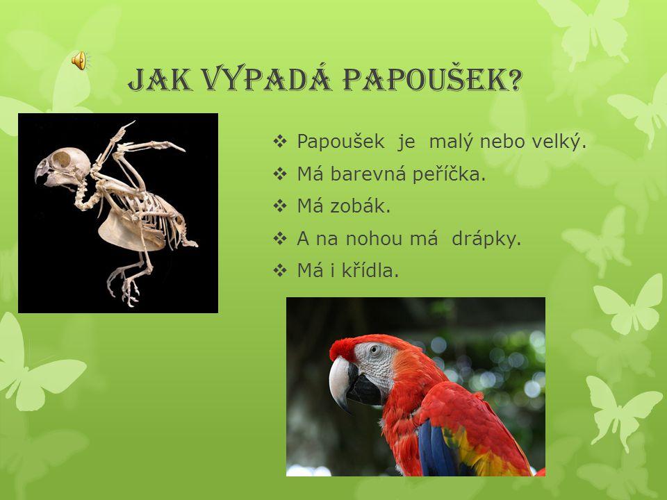 JAK VYPADÁ PAPOUŠEK?  Papoušek je malý nebo velký.  Má barevná peříčka.  Má zobák.  A na nohou má drápky.  Má i křídla.