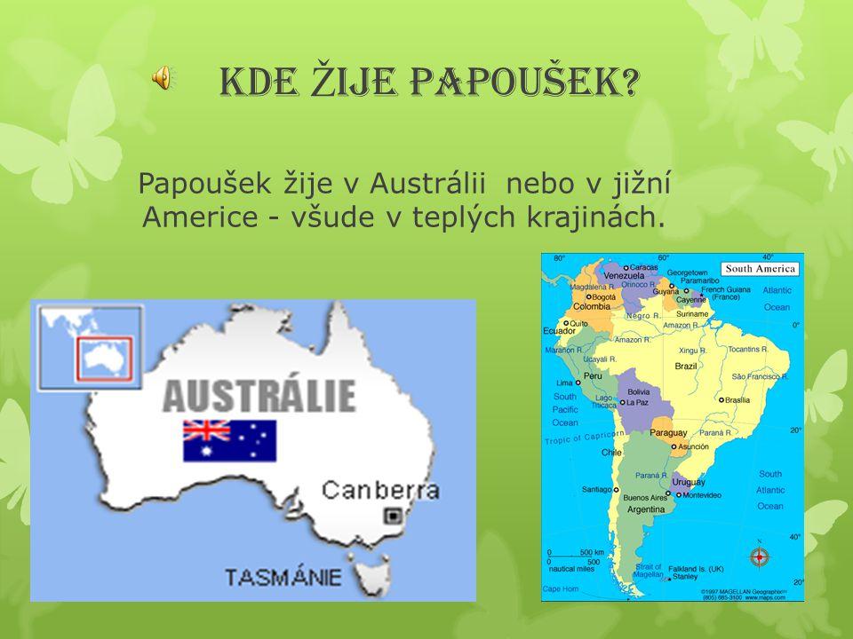 KDE Ž IJE PAPOUŠEK? Papoušek žije v Austrálii nebo v jižní Americe - všude v teplých krajinách.