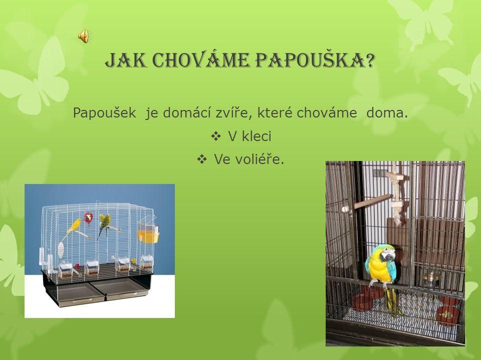 JAK CHOVÁME PAPOUŠKA? Papoušek je domácí zvíře, které chováme doma.  V kleci  Ve voliéře.