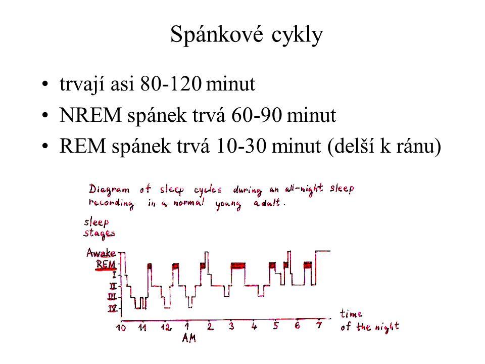 Spánkové cykly trvají asi 80-120 minut NREM spánek trvá 60-90 minut REM spánek trvá 10-30 minut (delší k ránu)