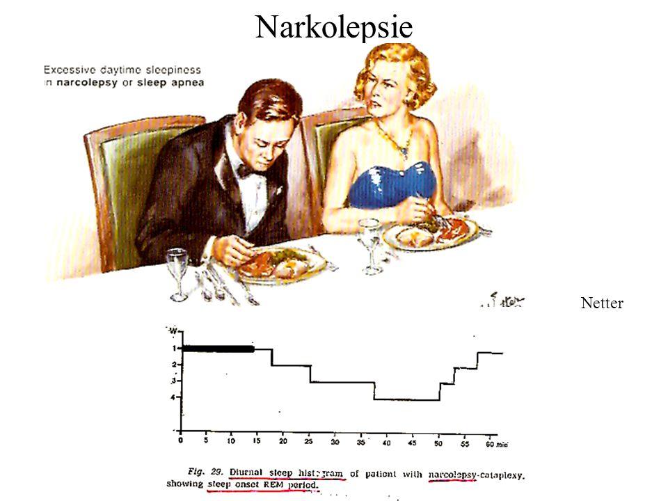 Narkolepsie Netter
