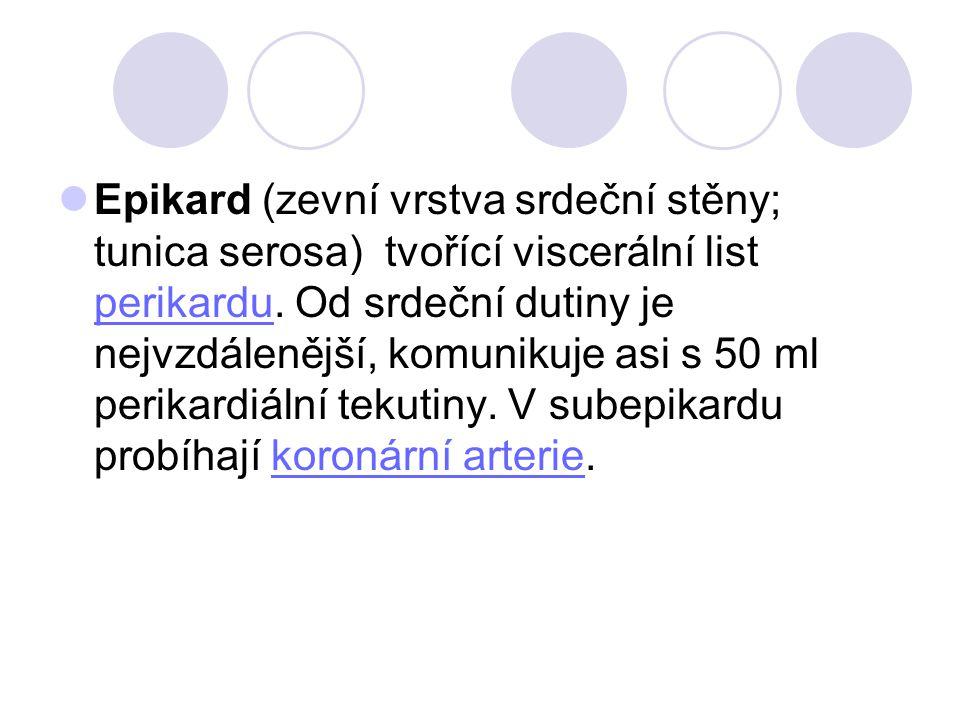 Epikard (zevní vrstva srdeční stěny; tunica serosa) tvořící viscerální list perikardu. Od srdeční dutiny je nejvzdálenější, komunikuje asi s 50 ml per