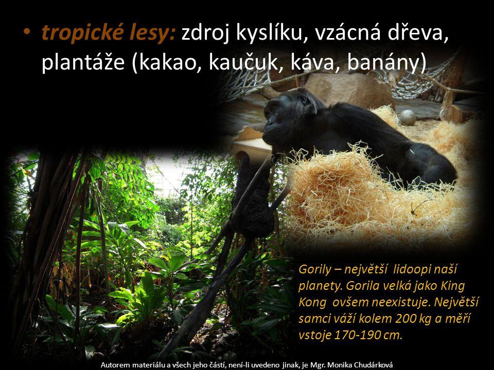 tropické lesy: zdroj kyslíku, vzácná dřeva, plantáže (kakao, kaučuk, káva, banány) Autorem materiálu a všech jeho částí, není-li uvedeno jinak, je Mgr