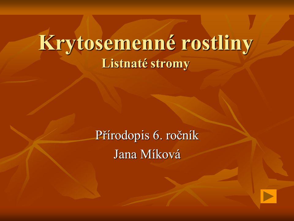 Krytosemenné rostliny Listnaté stromy Přírodopis 6. ročník Jana Míková