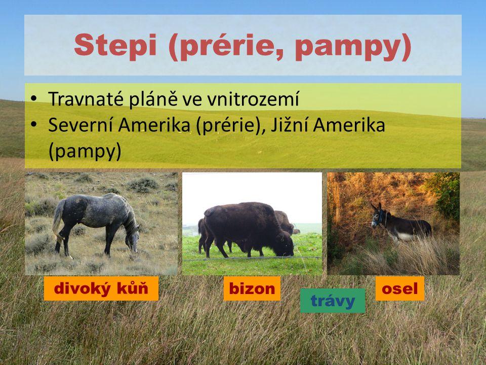 Stepi (prérie, pampy) Travnaté pláně ve vnitrozemí Severní Amerika (prérie), Jižní Amerika (pampy) divoký kůň trávy oselbizon