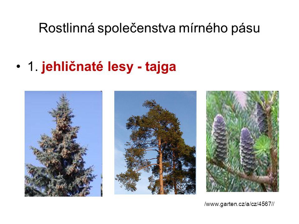 Rostlinná společenstva mírného pásu 1. jehličnaté lesy - tajga /www.garten.cz/a/cz/4567//