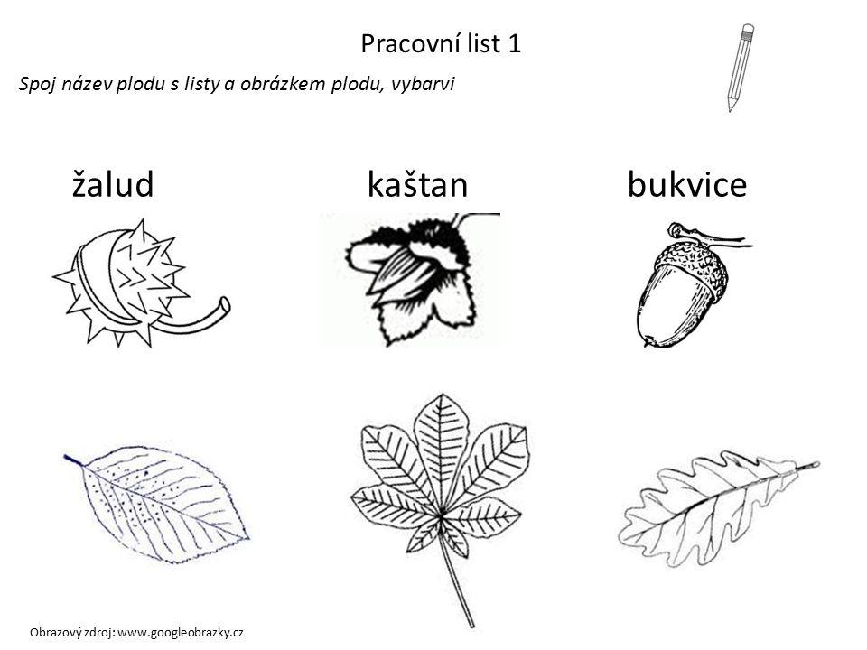 LISTNATÉ STROMY A JEJICH PLODY jírovec maďalbuk lesnídub letní kaštan žalud bukvice Obrazový zdroj: www.googleobrazky.cz