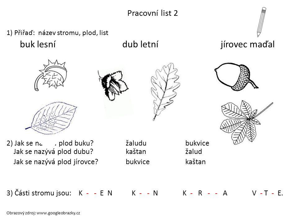 Pracovní list 1 Spoj název plodu s listy a obrázkem plodu, vybarvi žalud kaštan bukvice Obrazový zdroj: www.googleobrazky.cz