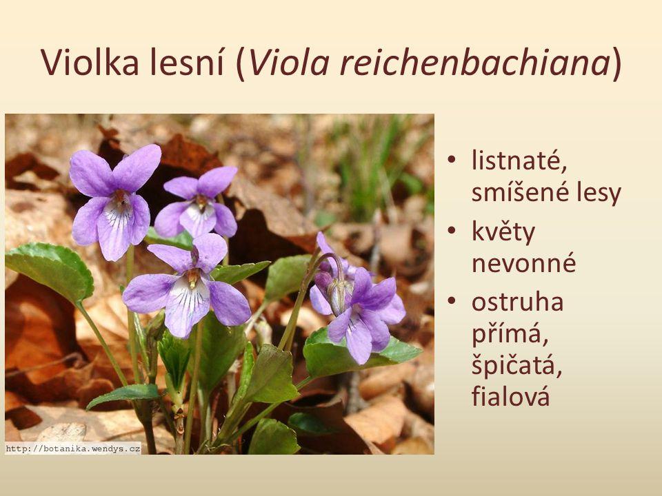 Violka Rivinova (Viola riviniana) sušší, chudší půdy světlé lesy, parky ostruha bělavá, tlustá