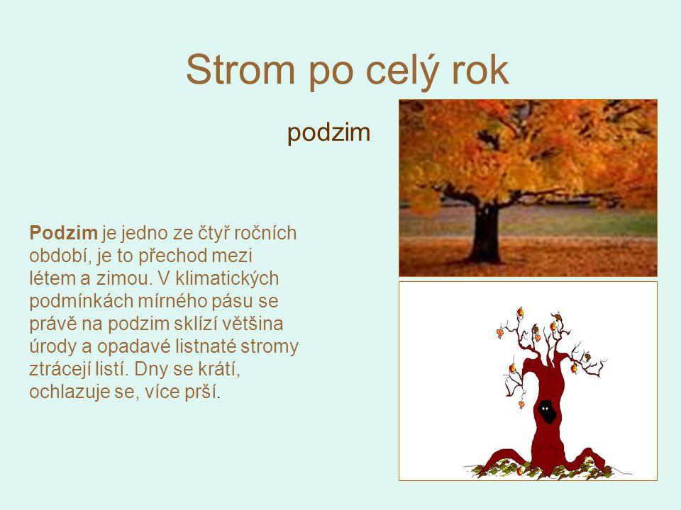 Strom po celý rok podzim Podzim je jedno ze čtyř ročních období, je to přechod mezi létem a zimou. V klimatických podmínkách mírného pásu se právě na