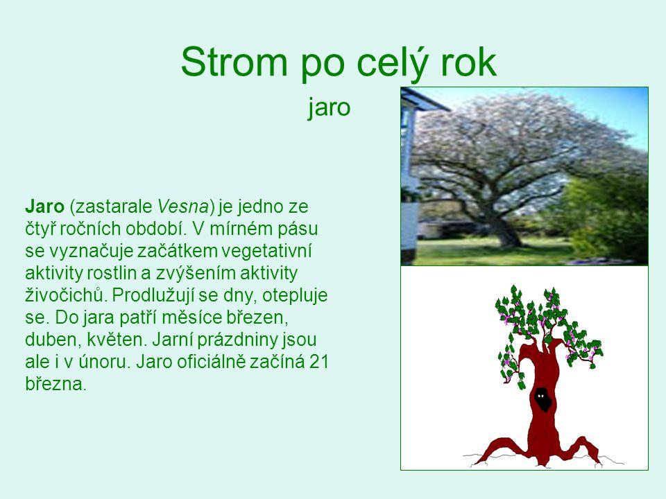 Strom po celý rok jaro Jaro (zastarale Vesna) je jedno ze čtyř ročních období. V mírném pásu se vyznačuje začátkem vegetativní aktivity rostlin a zvýš