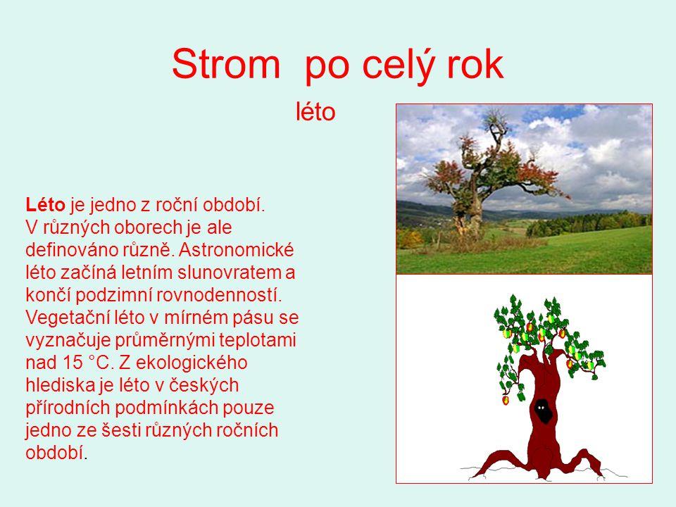 Strom po celý rok léto Léto je jedno z roční období. V různých oborech je ale definováno různě. Astronomické léto začíná letním slunovratem a končí po