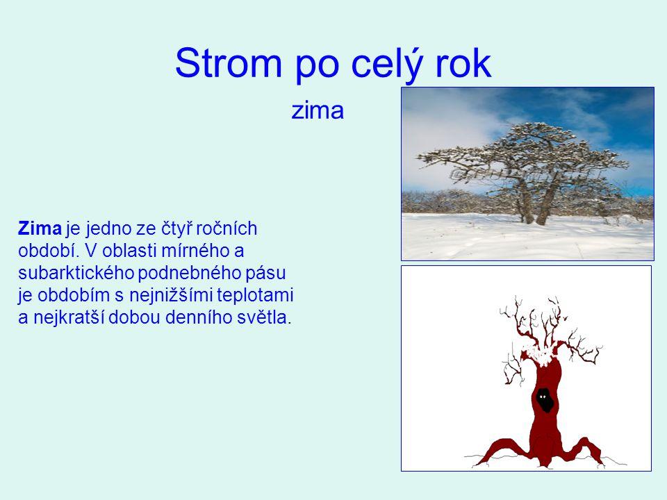 Strom po celý rok zima Zima je jedno ze čtyř ročních období. V oblasti mírného a subarktického podnebného pásu je obdobím s nejnižšími teplotami a nej