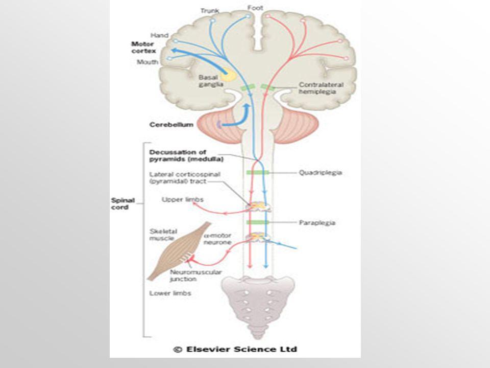 Tremor  Je pravidelná a sinusoidální oscilace části těla.