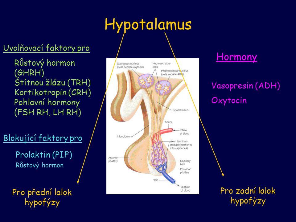 Hypotalamus Uvolňovací faktory pro Růstový hormon (GHRH) Štítnou žlázu (TRH) Kortikotropin (CRH) Pohlavní hormony (FSH RH, LH RH) Blokující faktory pr