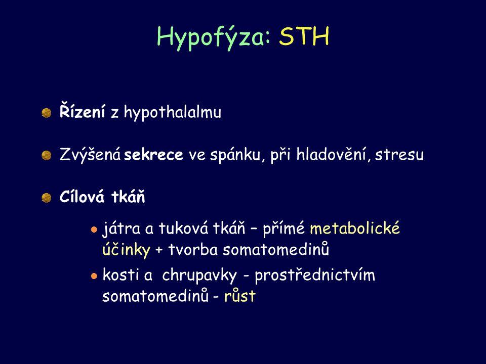 Hypofýza: STH Řízení z hypothalalmu Zvýšená sekrece ve spánku, při hladovění, stresu Cílová tkáň játra a tuková tkáň – přímé metabolické účinky + tvor