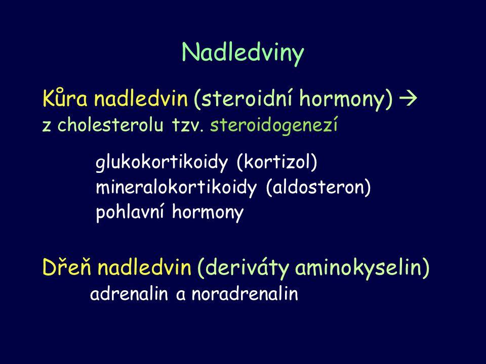 Kůra nadledvin (steroidní hormony)  z cholesterolu tzv. steroidogenezí glukokortikoidy (kortizol) mineralokortikoidy (aldosteron) pohlavní hormony Dř