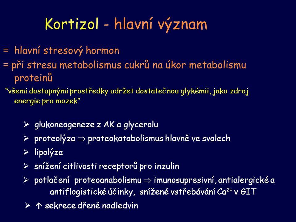 """Kortizol - hlavní význam = hlavní stresový hormon = při stresu metabolismus cukrů na úkor metabolismu proteinů """"všemi dostupnými prostředky udržet dos"""