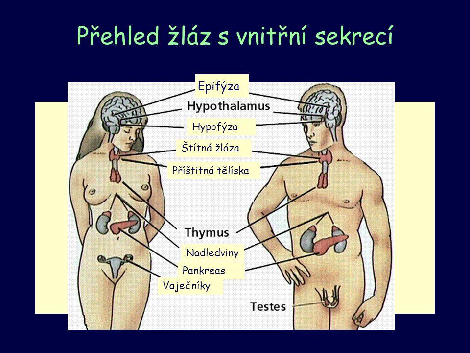 Přehled žláz s vnitřní sekrecí Epifýza Hypofýza Nadledviny Štítná žláza Příštitná tělíska Vaječníky Pankreas