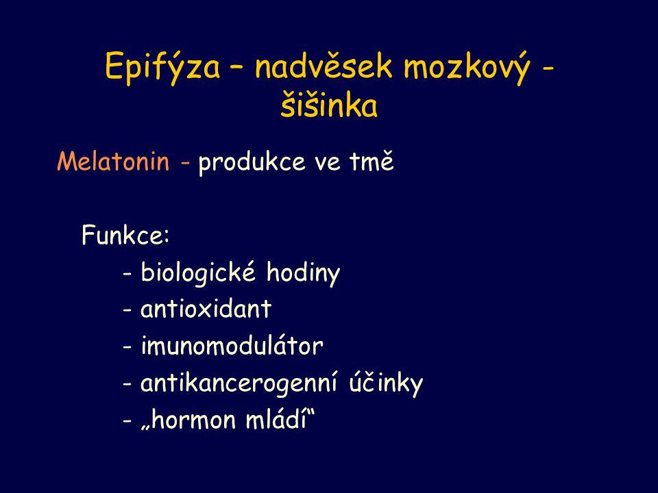 Epifýza – nadvěsek mozkový - šišinka Melatonin - produkce ve tmě Funkce: - biologické hodiny - antioxidant - imunomodulátor - antikancerogenní účinky