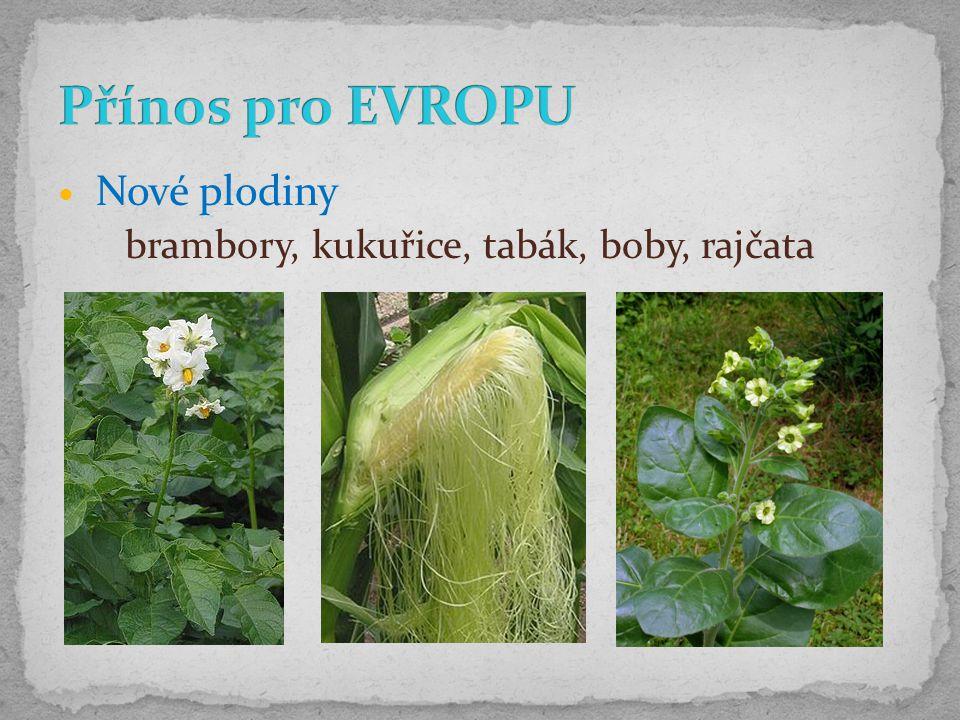 Nové plodiny brambory, kukuřice, tabák, boby, rajčata