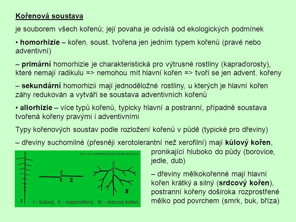 Kořenová soustava je souborem všech kořenů; její povaha je odvislá od ekologických podmínek homorhizie – kořen. soust. tvořena jen jedním typem kořenů