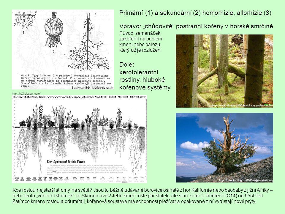 Kde rostou nejstarší stromy na světě.