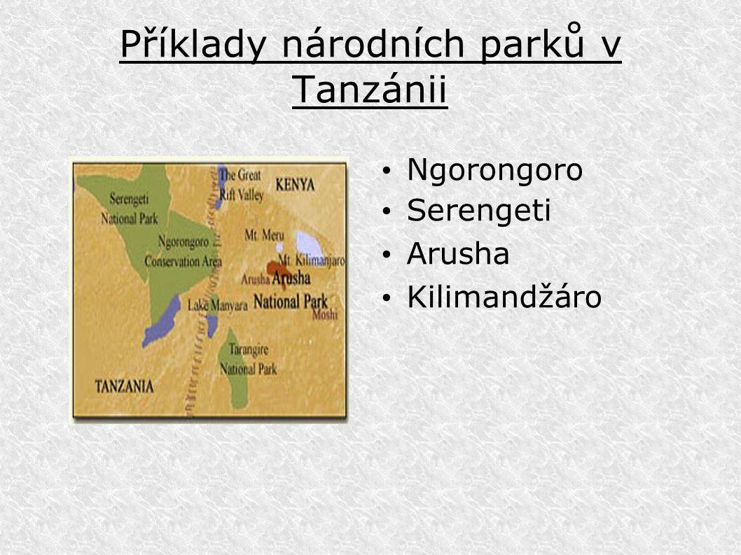 Příklady národních parků v Tanzánii Ngorongoro Serengeti Arusha Kilimandžáro