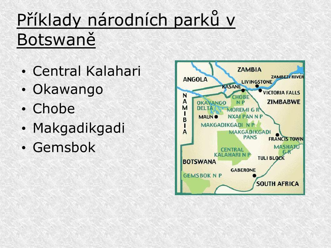Příklady národních parků v Botswaně Central Kalahari Okawango Chobe Makgadikgadi Gemsbok