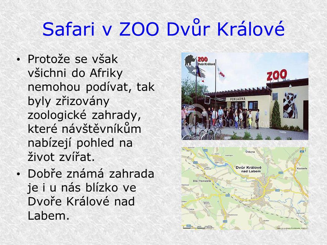 Safari v ZOO Dvůr Králové Protože se však všichni do Afriky nemohou podívat, tak byly zřizovány zoologické zahrady, které návštěvníkům nabízejí pohled