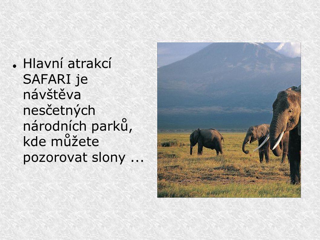 Hlavní atrakcí SAFARI je návštěva nesčetných národních parků, kde můžete pozorovat slony...