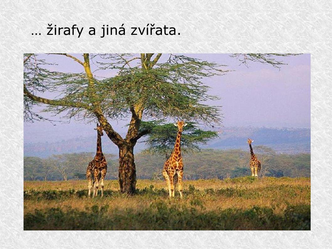 … žirafy a jiná zvířata.