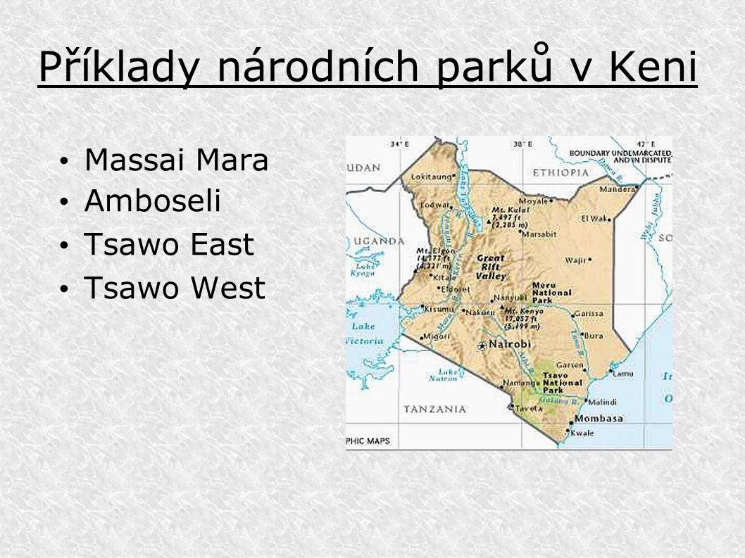 Příklady národních parků v Keni Massai Mara Amboseli Tsawo East Tsawo West
