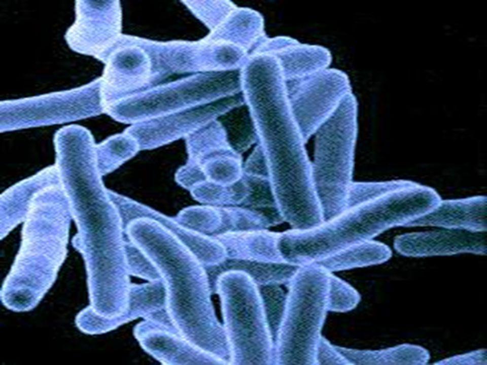Streptokoková angína  Léčba: penicilin, v případě alergie na pnc jiná antibiotika, klidový režim, tlumení teploty  Nutné včasné zahájení terapie z důvodu předcházení život ohrožujícím komplikacím