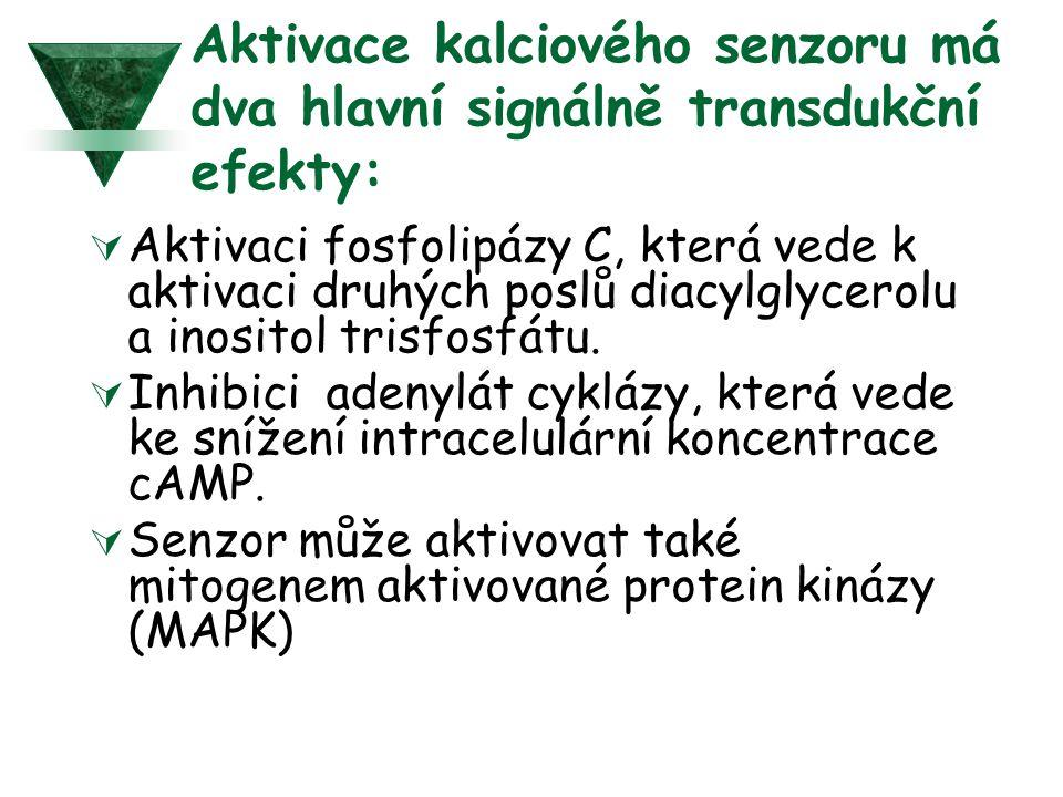 Aktivace kalciového senzoru má dva hlavní signálně transdukční efekty:  Aktivaci fosfolipázy C, která vede k aktivaci druhých poslů diacylglycerolu a inositol trisfosfátu.