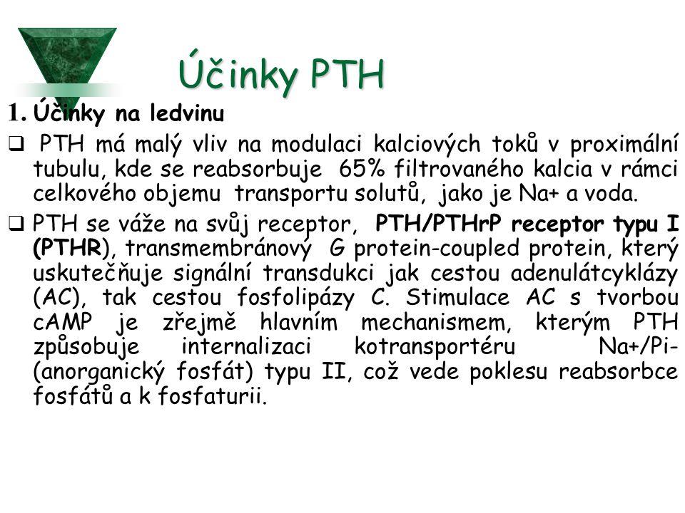 Účinky PTH 1.