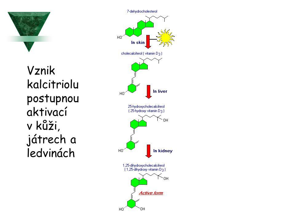 Vznik kalcitriolu postupnou aktivací v kůži, játrech a ledvinách