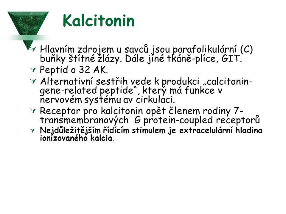 Kalcitonin  Hlavním zdrojem u savců jsou parafolikulární (C) buňky štítné žlázy.