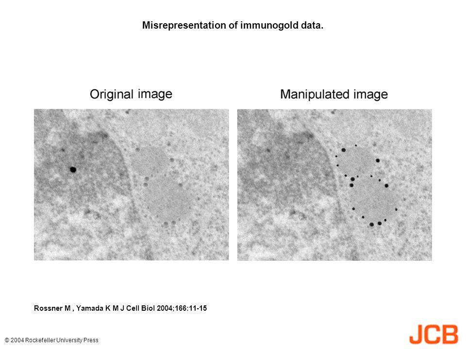 Misrepresentation of immunogold data. Rossner M, Yamada K M J Cell Biol 2004;166:11-15 © 2004 Rockefeller University Press