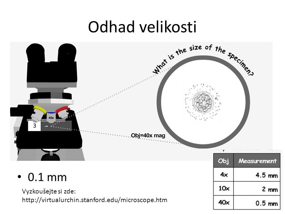 Odhad velikosti 0.1 mm Vyzkoušejte si zde: http://virtualurchin.stanford.edu/microscope.htm