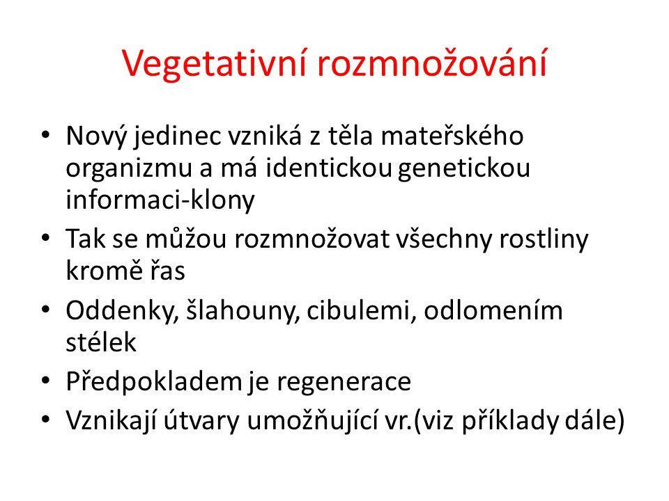 Vegetativní rozmnožování Nový jedinec vzniká z těla mateřského organizmu a má identickou genetickou informaci-klony Tak se můžou rozmnožovat všechny r