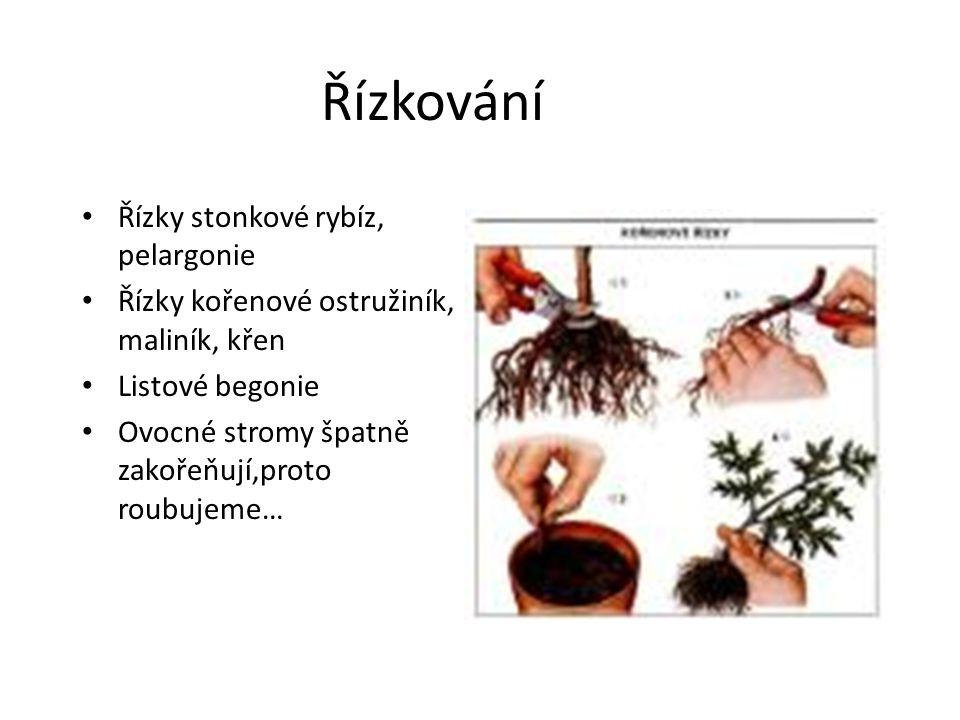 Řízkování Řízky stonkové rybíz, pelargonie Řízky kořenové ostružiník, maliník, křen Listové begonie Ovocné stromy špatně zakořeňují,proto roubujeme…