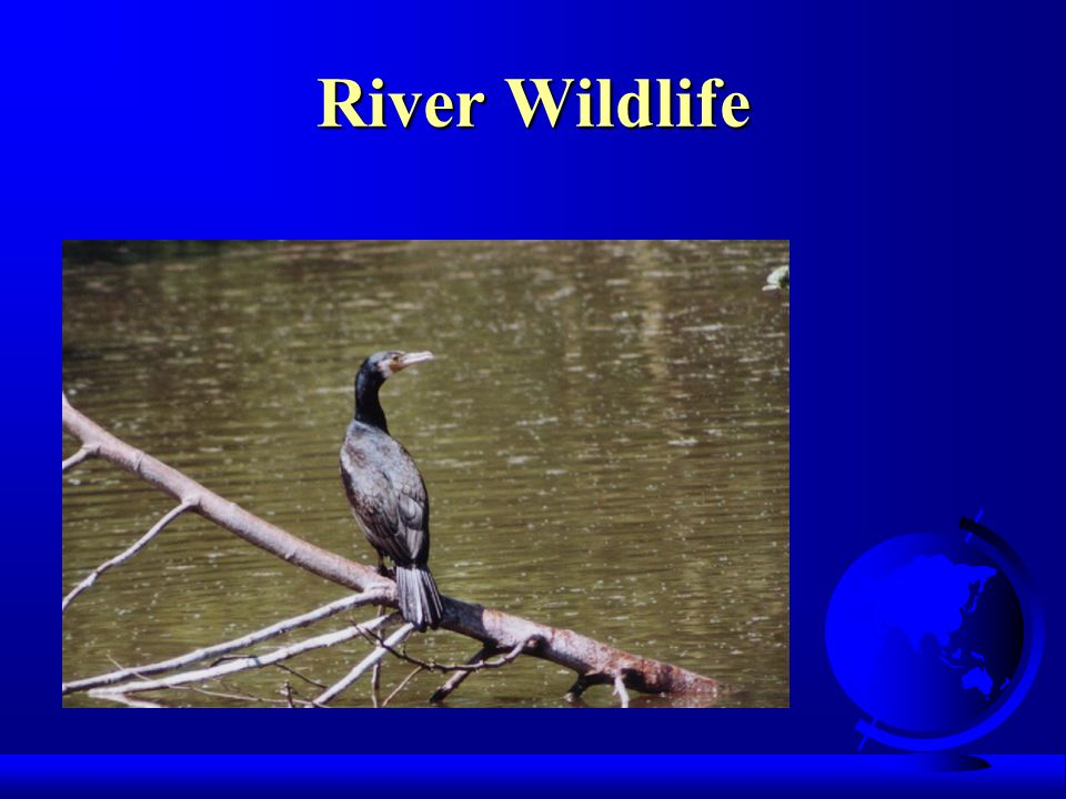 River Wildlife