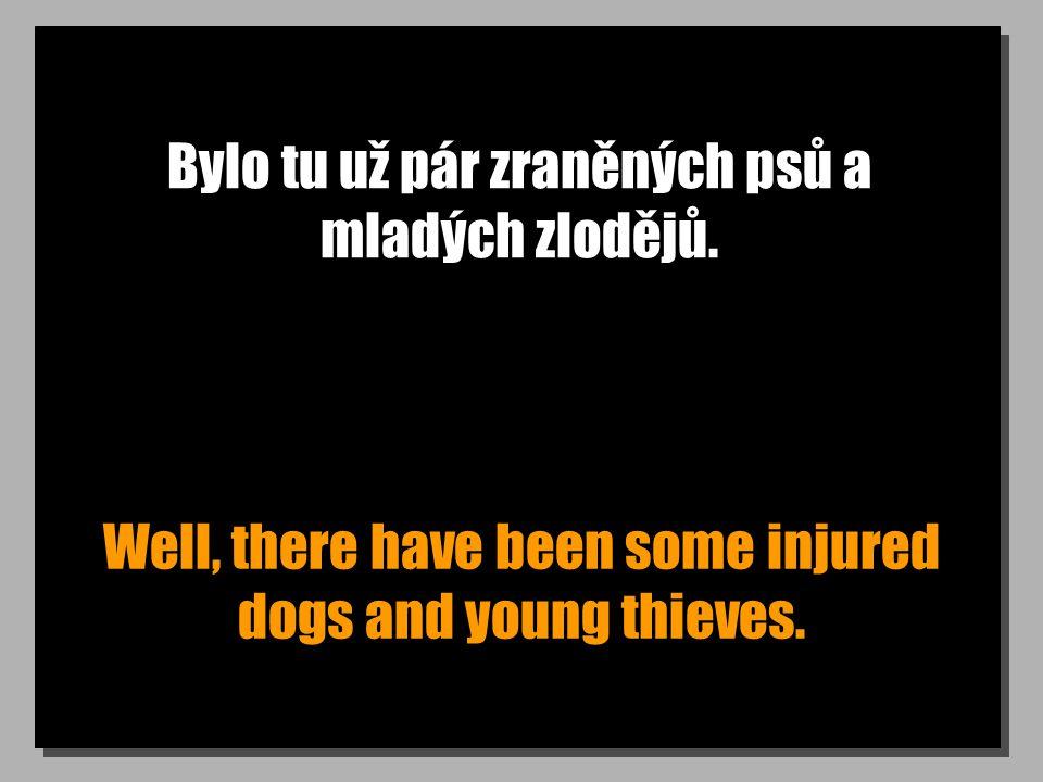 Bylo tu už pár zraněných psů a mladých zlodějů.