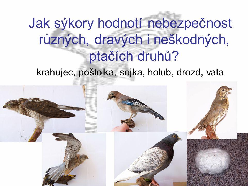 Jak sýkory hodnotí nebezpečnost různých, dravých i neškodných, ptačích druhů? krahujec, poštolka, sojka, holub, drozd, vata