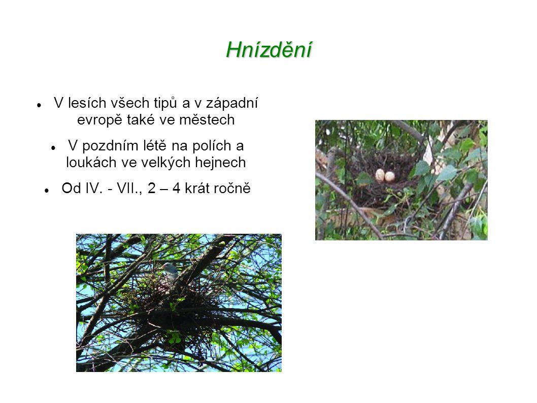 Hnízdění V lesích všech tipů a v západní evropě také ve městech V pozdním létě na polích a loukách ve velkých hejnech Od IV.