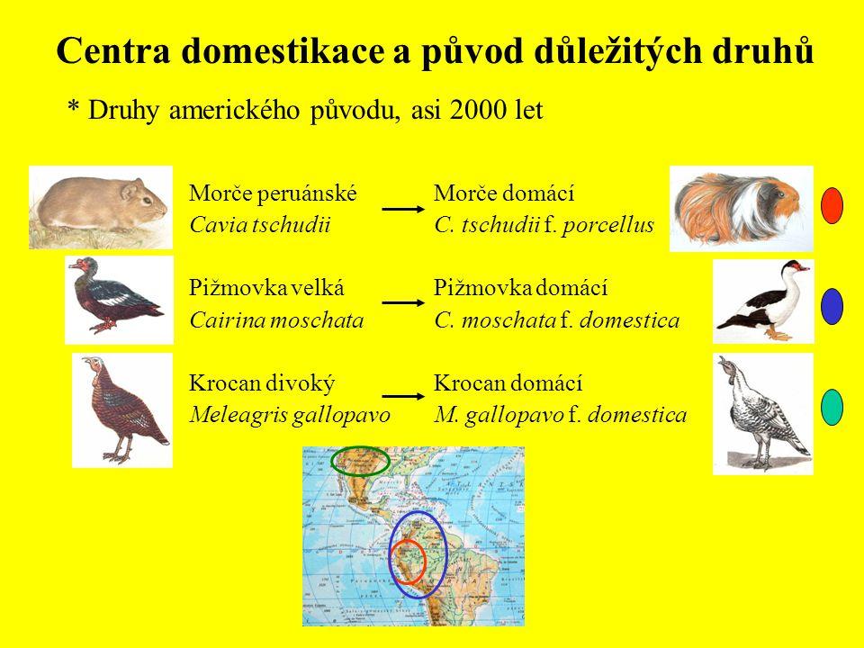Centra domestikace a původ důležitých druhů * Druhy amerického původu, asi 2000 let Morče domácí C. tschudii f. porcellus Pižmovka domácí C. moschata