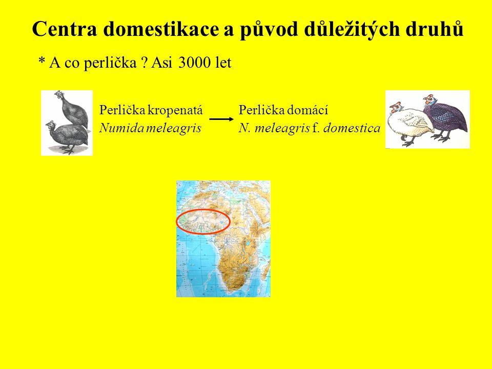 Centra domestikace a původ důležitých druhů * A co perlička ? Asi 3000 let Perlička domácí N. meleagris f. domestica Perlička kropenatá Numida meleagr