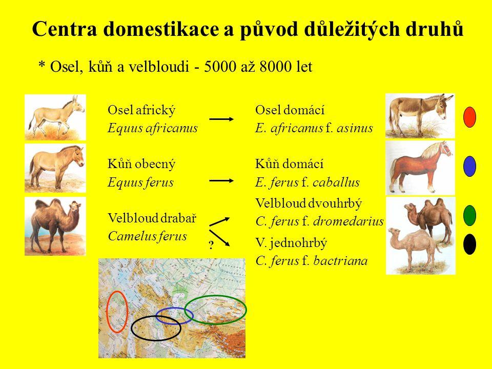 Centra domestikace a původ důležitých druhů * Osel, kůň a velbloudi - 5000 až 8000 let Osel domácí E. africanus f. asinus Kůň domácí E. ferus f. cabal